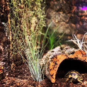 kryjówka w terrarium tillandsia juncifolia